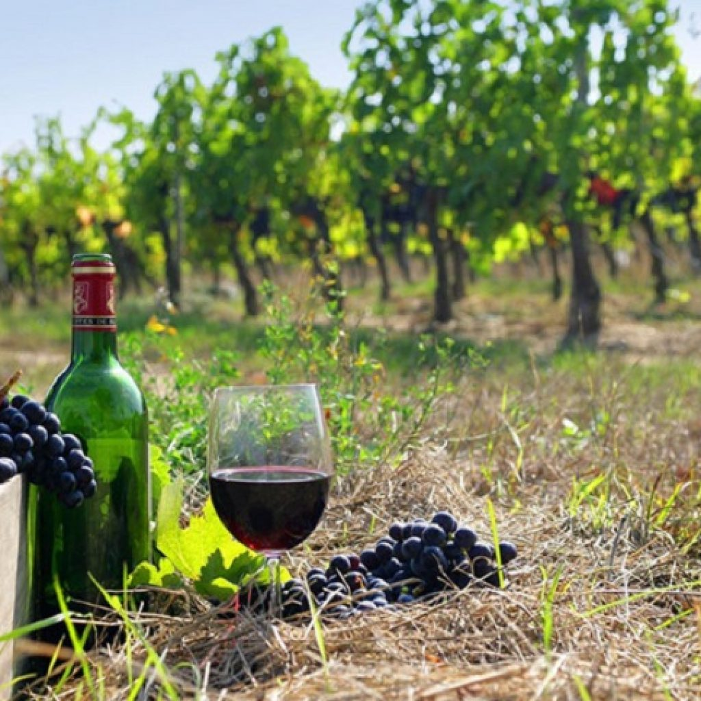 Discover Mythical Peloponnese_Nemea_Wine_Tasting