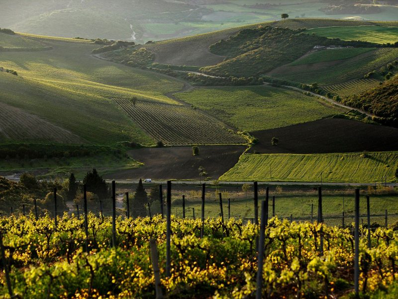 Discover Mythical Peloponnese_Nemea endless vineyards