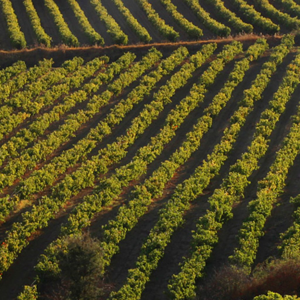 Discover Mythical Peloponnese_nemea vineyards