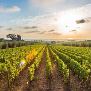 Discover Mythical Peloponnese_Nemea wine roads
