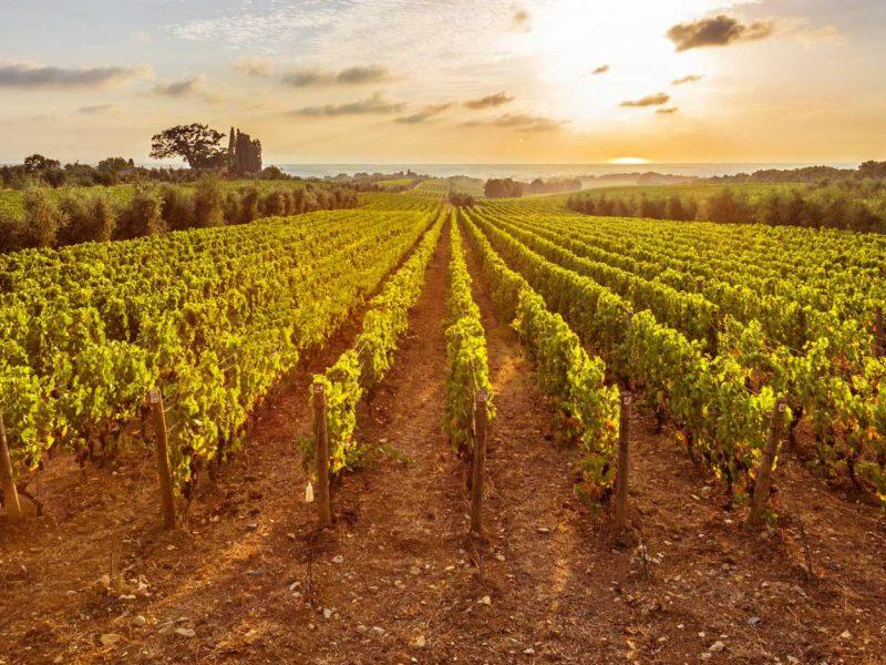 Nemea wine roads